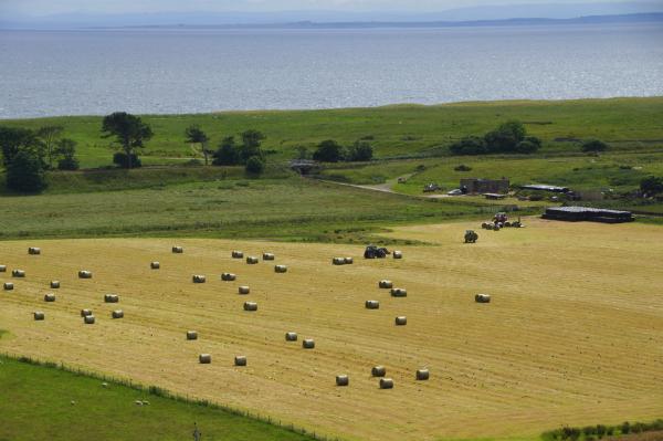 Les champs au bord de l'eau/ Fields by the sea