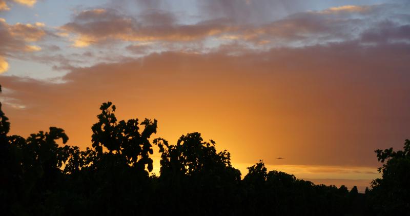 Les vignes le matin...