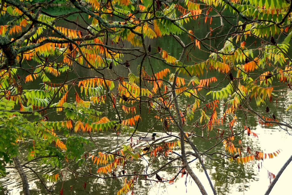 Guirlandes d'automne