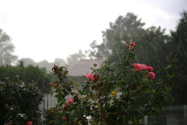 Dimanche arrosé/ Rainy Sunday