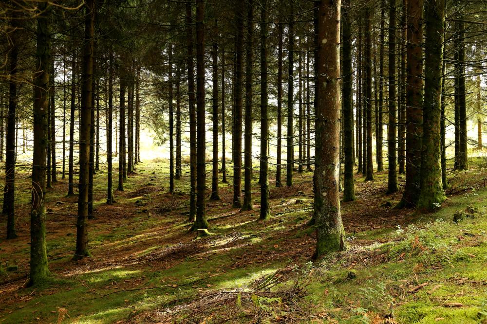Promenons-nous dans la forêt...