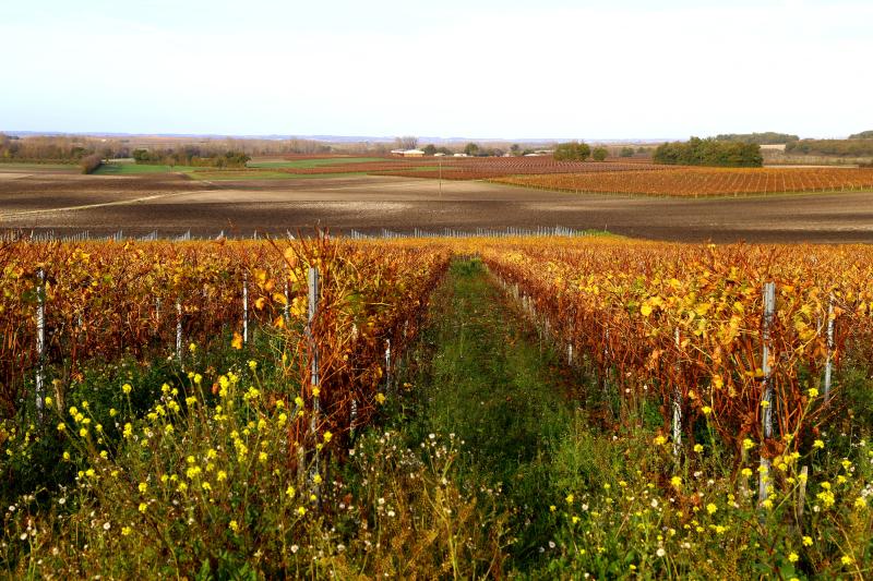 Les vignes en automne