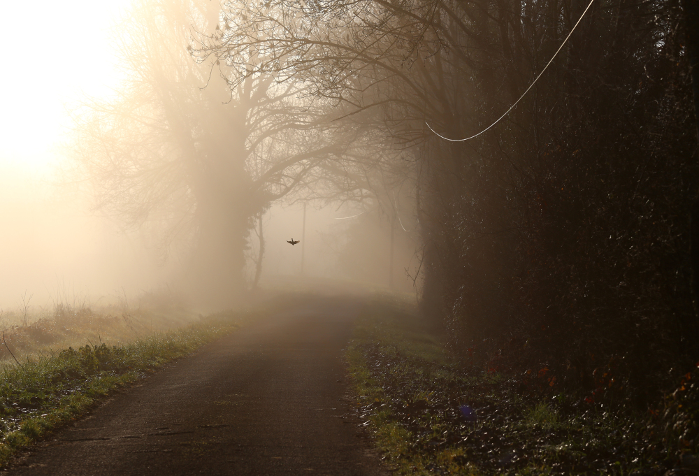 Un autre matin brumeux