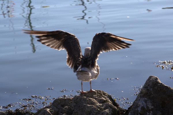 Des reflets et des ailes 3