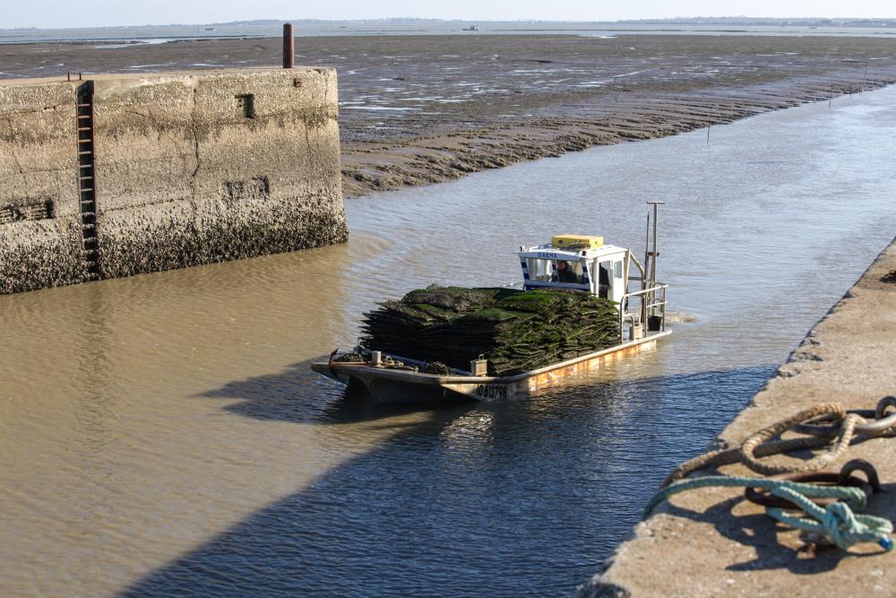 Les huîtres arrivent au port!