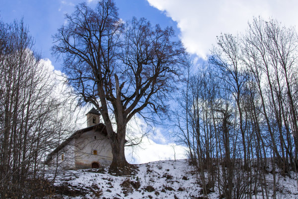 La chapelle auprès de son arbre.