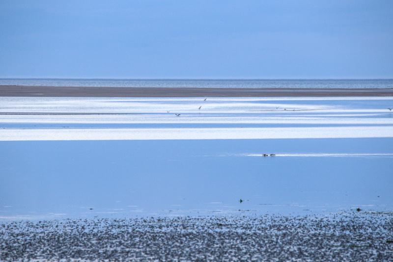 Rayures marines / Blue sea stripes.