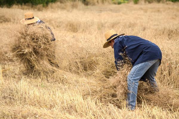 Les travaux des champs 1
