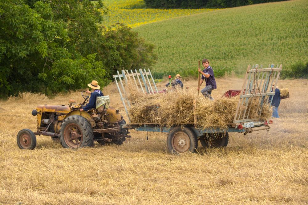 Les travaux des champs  3