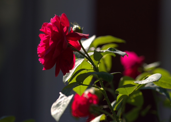 Dans mon jardin 2