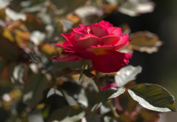 Dans mon jardin 3