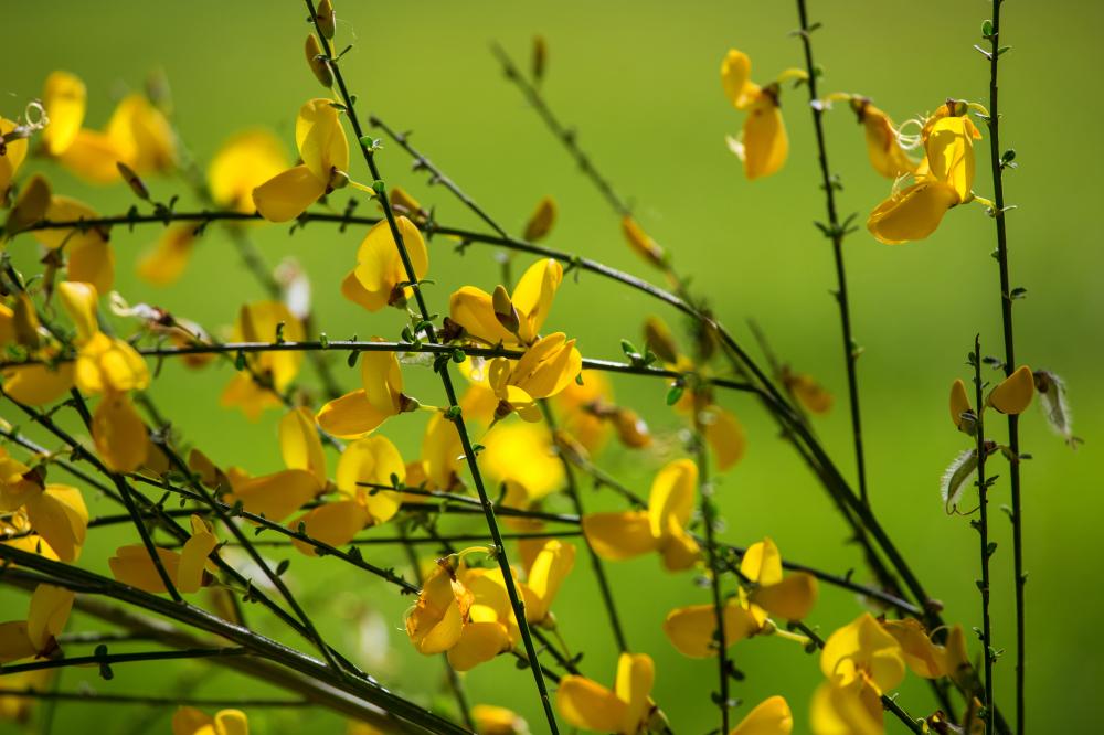 Le jaune 3