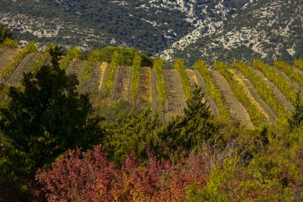 Paysages du Roussillon 3