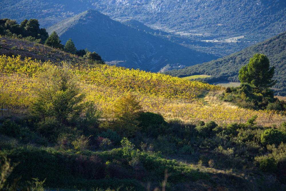Paysages du Roussillon 6