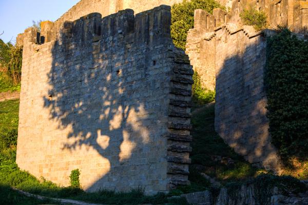 L'ombre de l'arbre.
