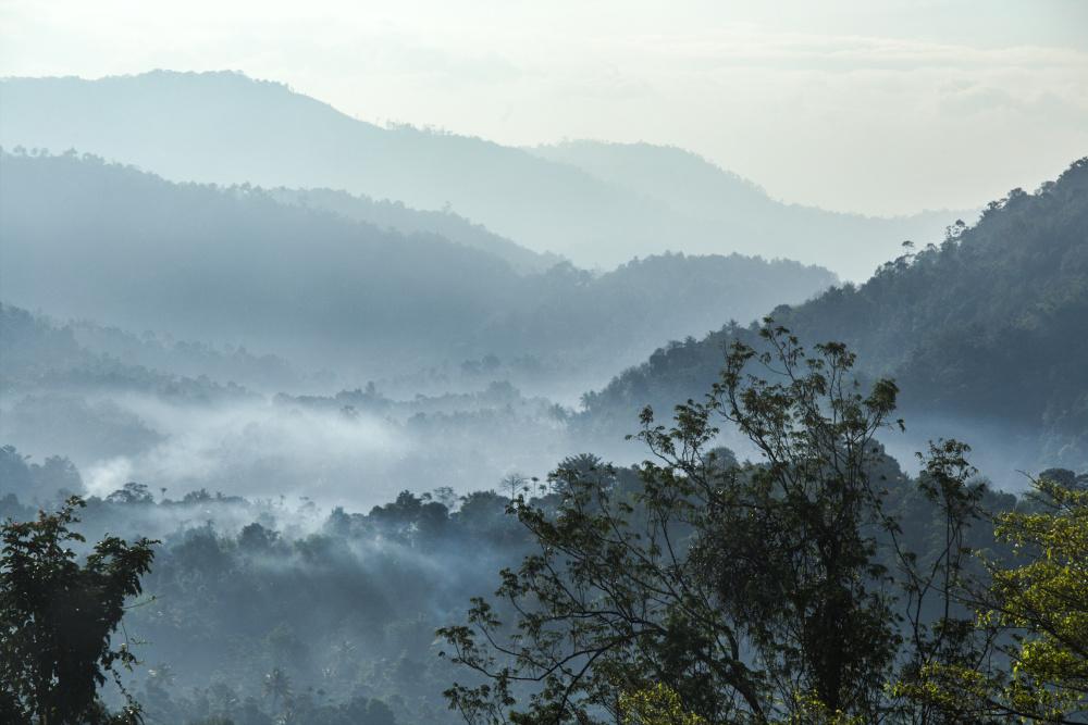 Un matin au Kerala