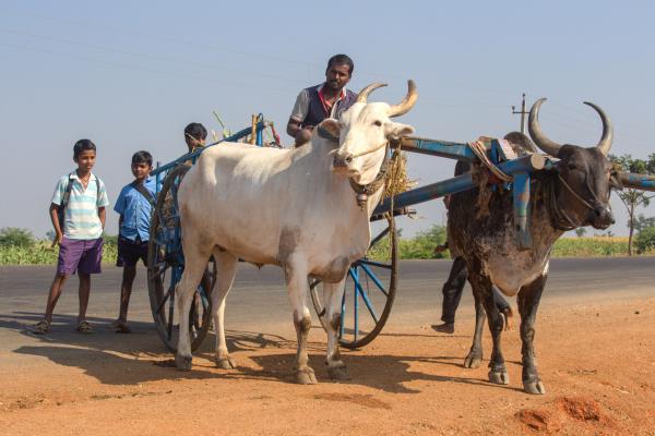 Scènes de la vie rurale 1