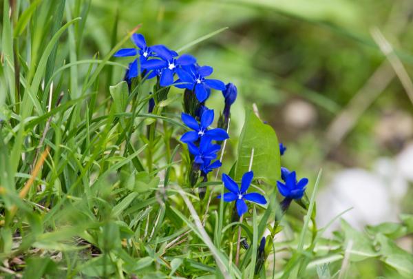 Fleurs de montagne 1