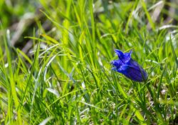 Fleur de montagne 3