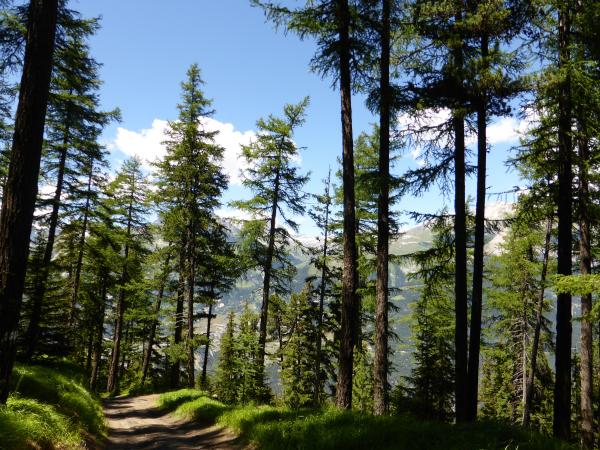 Paysage alpin 5