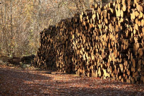 Se chauffer au bois?