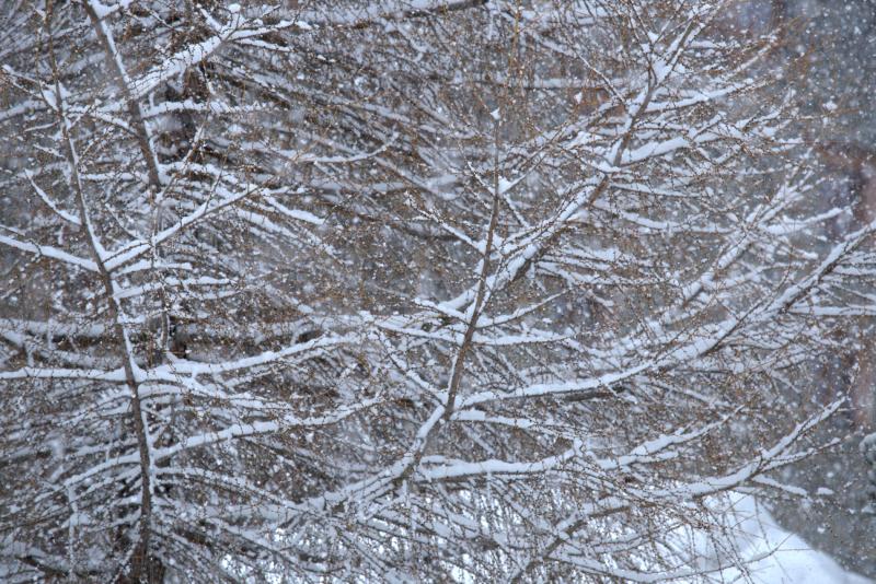 Branches sous la neige