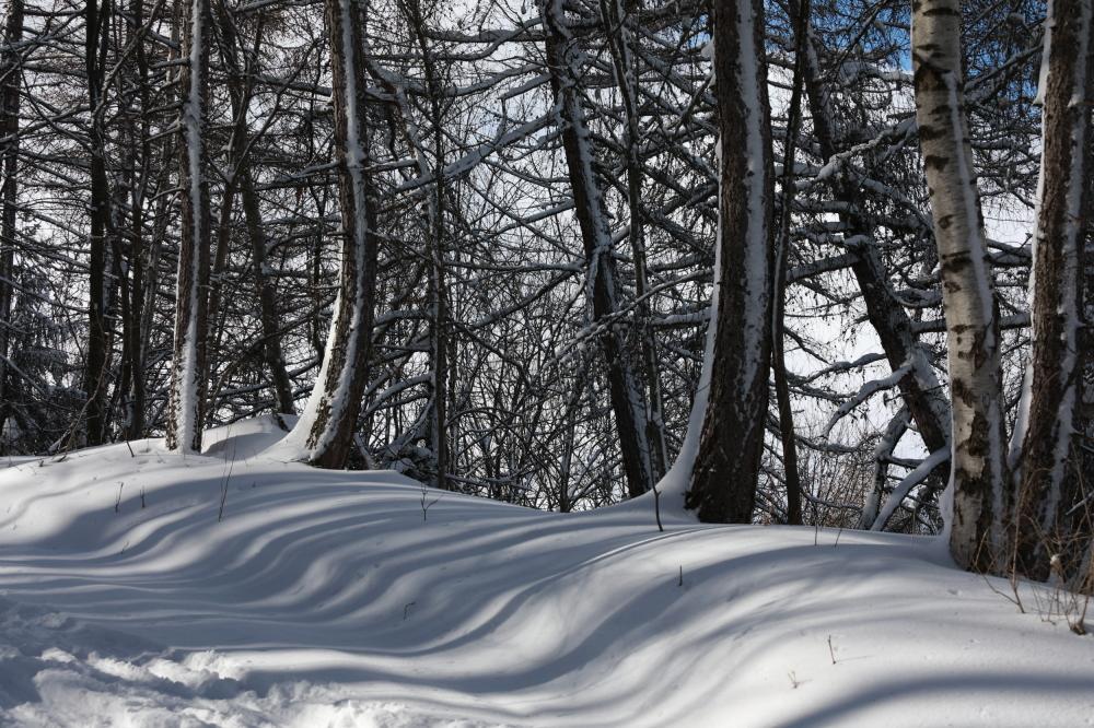 Le chemin dans les bois 1