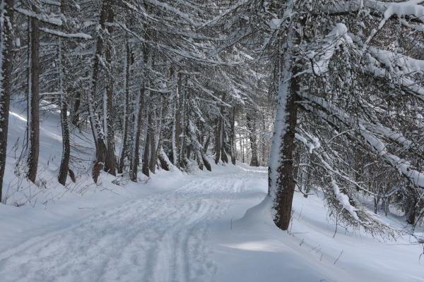 Le chemin dans les bois 2