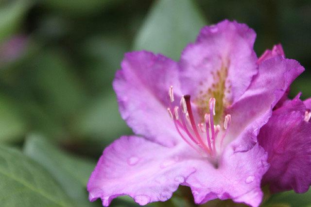 Flower after Rain-Fall~