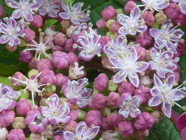 Symphonie florale 4