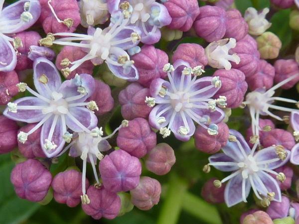Symphonie florale 5
