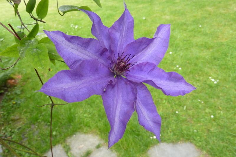 bleu star