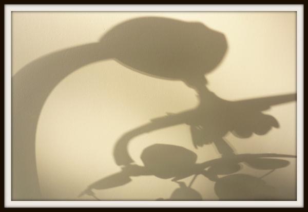 Shadow !