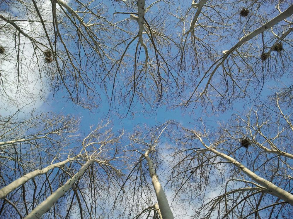 spring sky