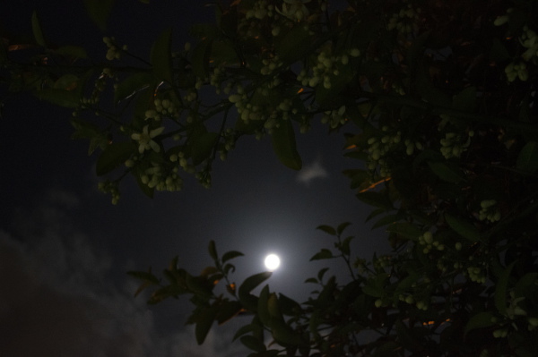 moonlight glory