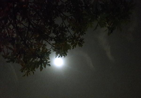ای که تو ماه آسمان