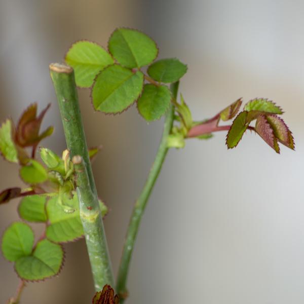New leaves - Memory