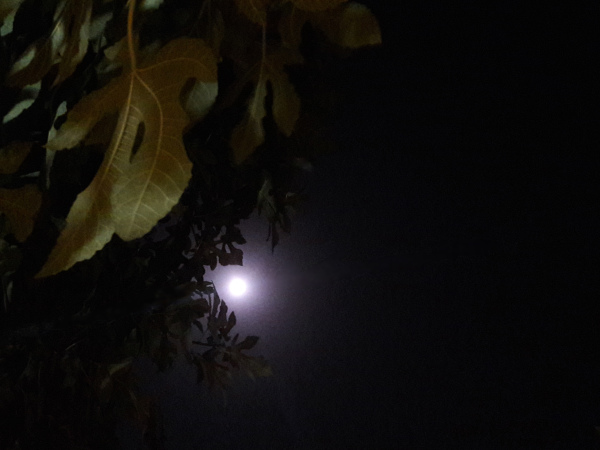 Leaves and the moon at the beginning of the fall
