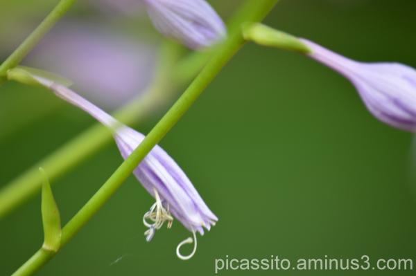 Preppy Spring Flowers