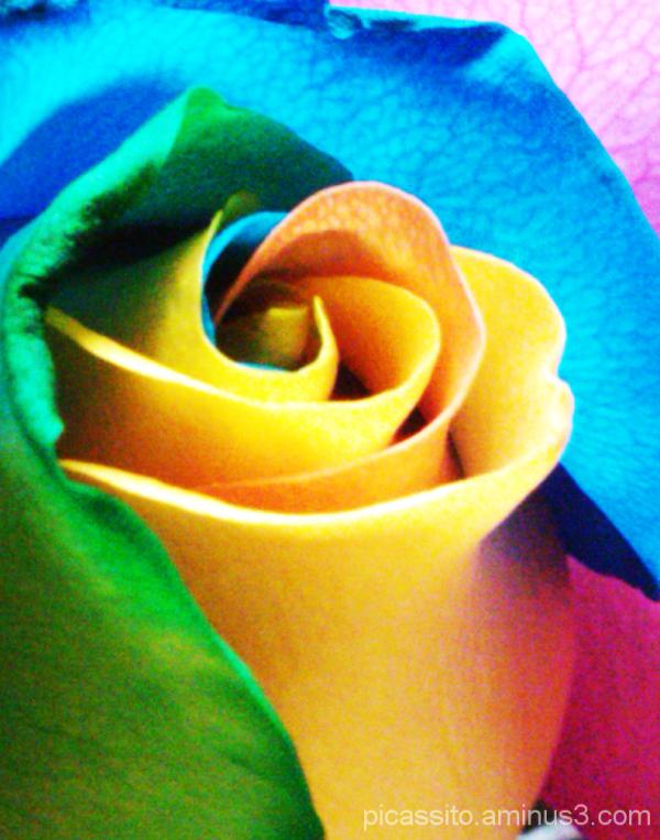 Dip Dyed Roses