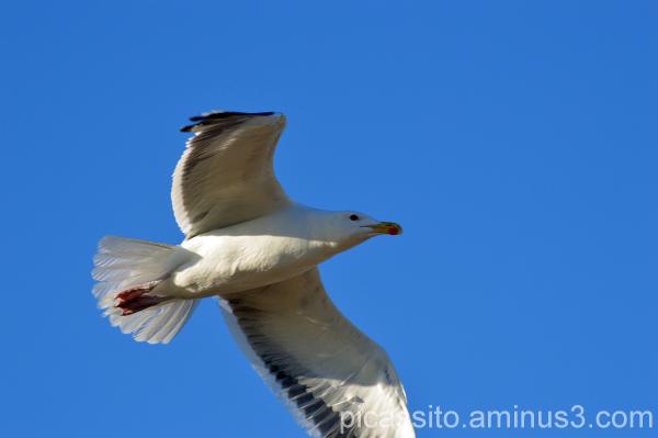 Under My Wings