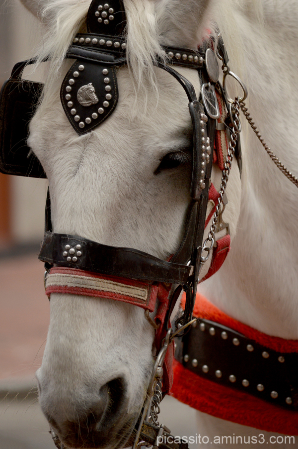 Tommy the White Horse