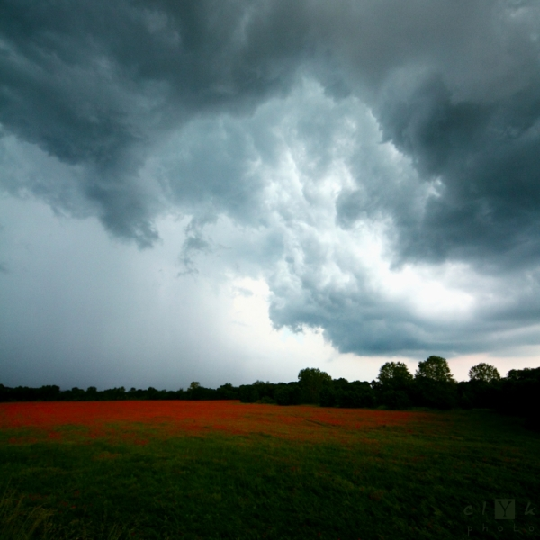 clYk landsape storm poppies paysage orage fleurs