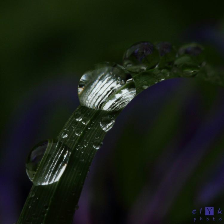 clYk nature raindrops gouttes pluie macro
