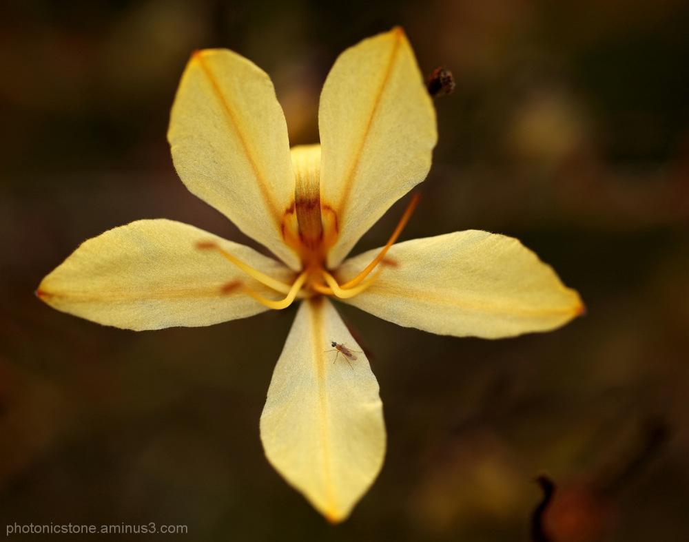 Cape Flora South Africa Hermanus Fern Kloof