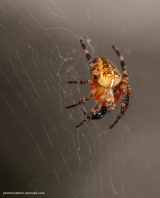 Spider, Portland, Oregon