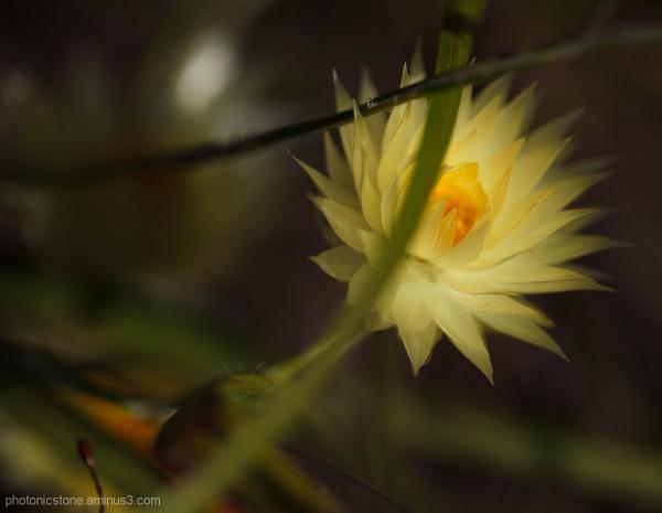 Fynbos, hermanus, south africa, fernkloof