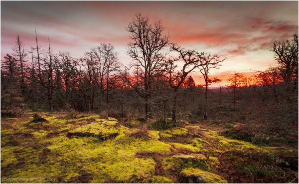Moss & Oak .. at sunrise