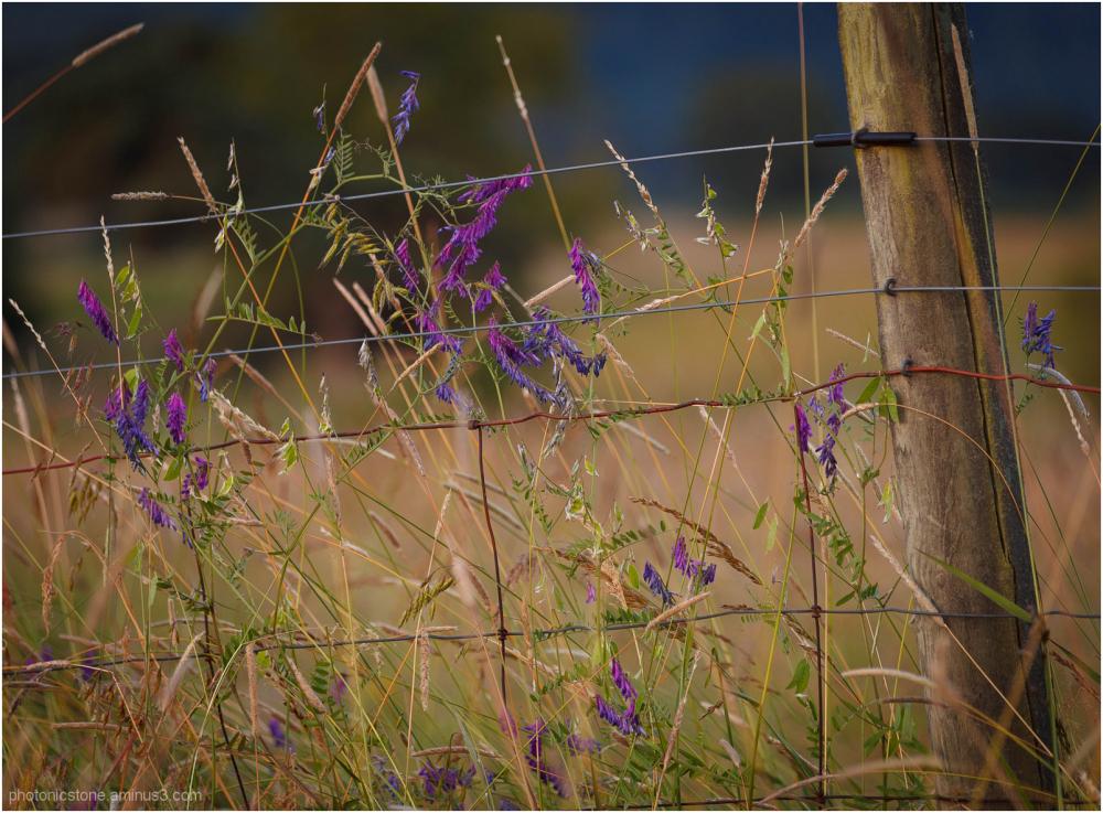 Washburn Heights - Flora
