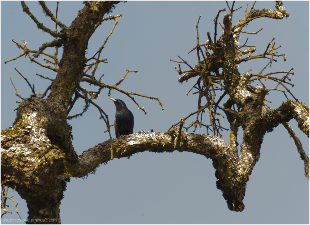 A tree and its bird